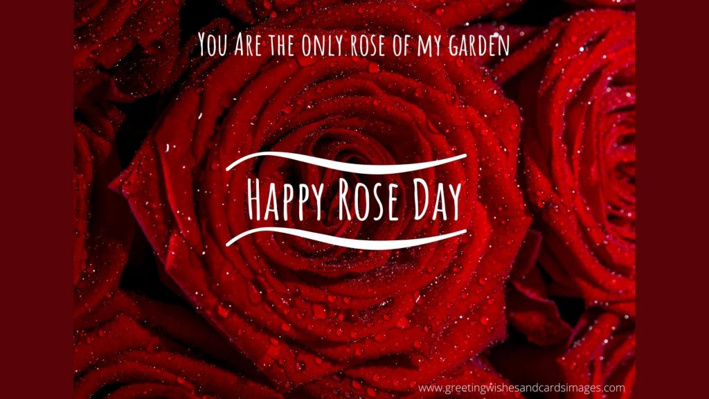 Rose Day 2021 Greetings Images