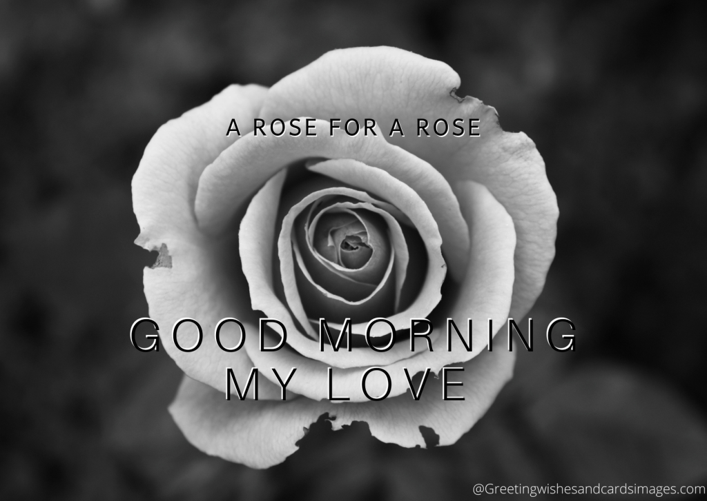 goodmorning my love quotes messages images 15