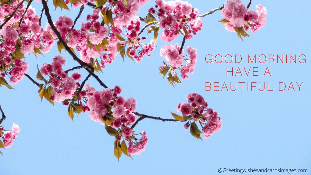 Good Morning Flower Text