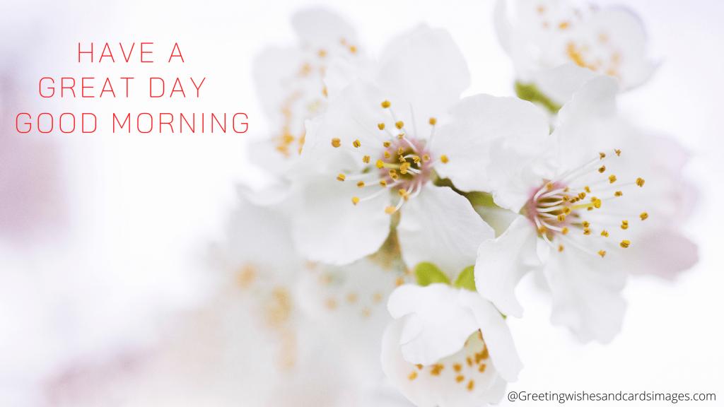 Good Morning Flower Sms