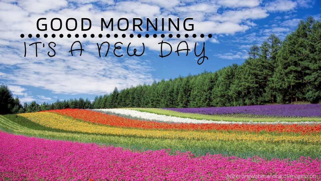 Beautiful Flower Images For Good Morning