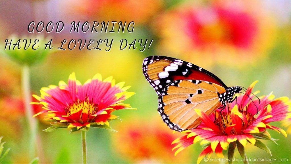 Morning Flower Images