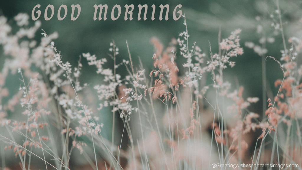 Morning Flower Sms