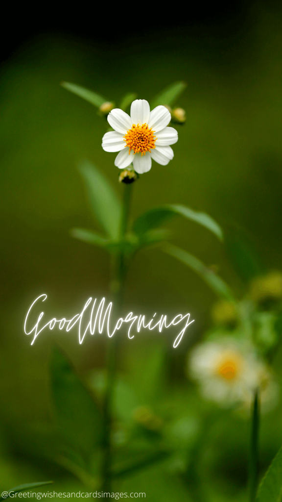 Good Morning With Beautiful Flowers Pics