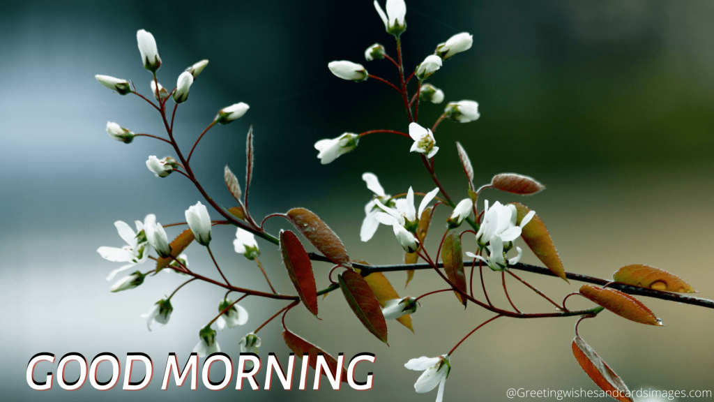 Good Morning With Beautiful Flower Images