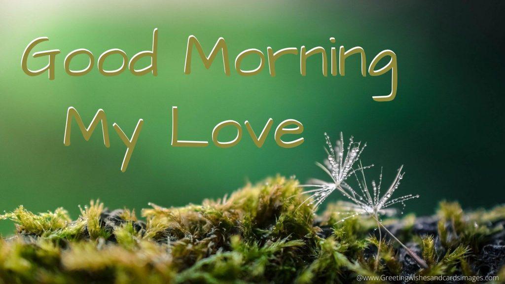 Best Good Morning Pics For Lover