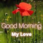 Best Good Morning Pics For Lover 2021 With Flowers