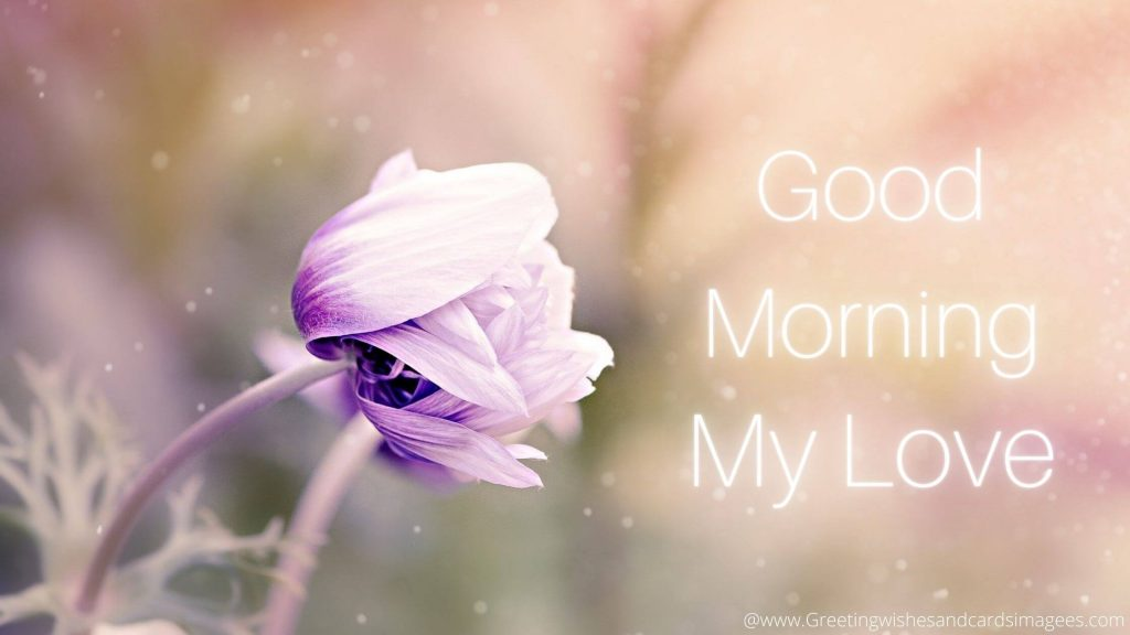 Good Morning Image With Purple Flower