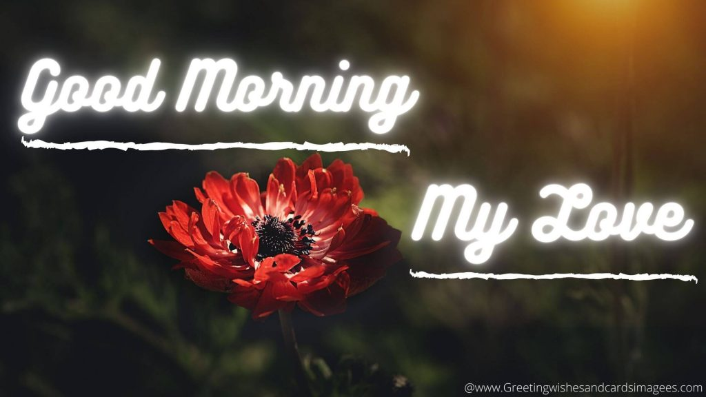 Good Morning Image With Red Flower
